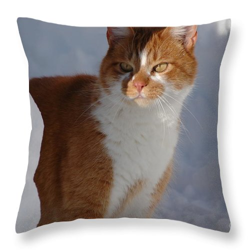 Orange Throw Pillow featuring the photograph Otis by Christiane Hellner-OBrien