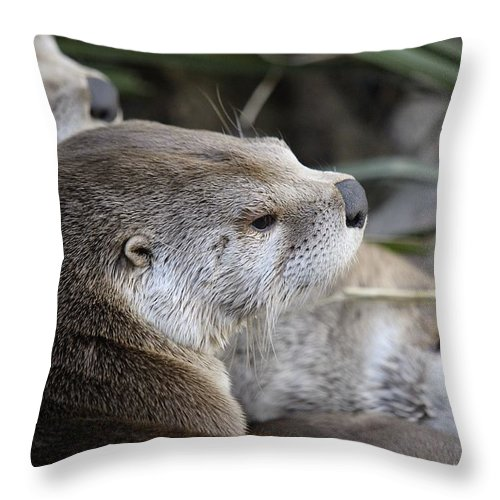 Otters Throw Pillow featuring the photograph Otter And Family by Jenny Potter