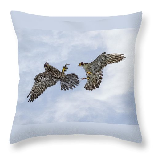 Bird Throw Pillow featuring the photograph Young Peregrine Falcon And Ma Share In The Air by Leslie Reagan - Joy To The Wild Photos