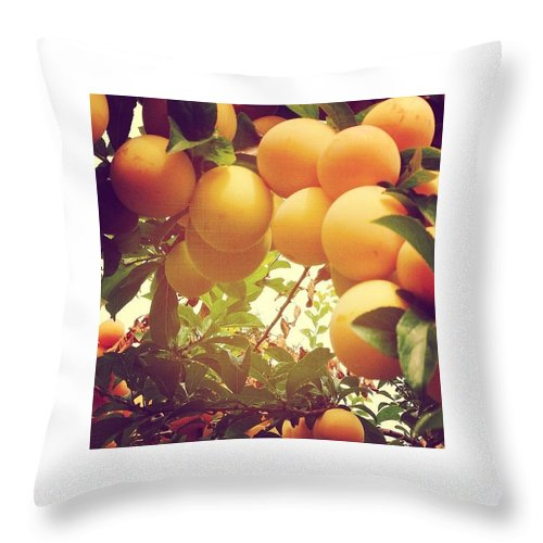 Plums Throw Pillow featuring the photograph Our Plum Tree Is Loaded This Year...any by Blenda Studio