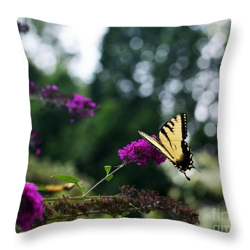 Butterfly Throw Pillow featuring the photograph Out Of Bounds 3 by Judy Wolinsky