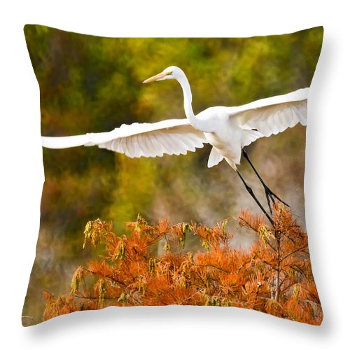 Bird Throw Pillow featuring the photograph Out Of The Box by James Ekstrom