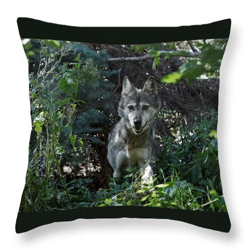 Wolf Throw Pillow featuring the photograph Out Of The Bushes by Ernie Echols