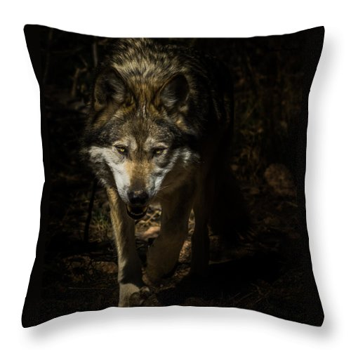 Wolf Throw Pillow featuring the photograph Out Of The Dark by Ernie Echols
