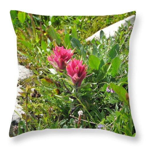 Castilleja Miniata Throw Pillow featuring the photograph Paintbrush Spring Closeup by Pam Little