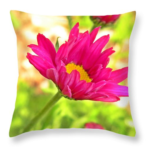 Throw Pillow featuring the photograph Painted Daisies by Chris Berry