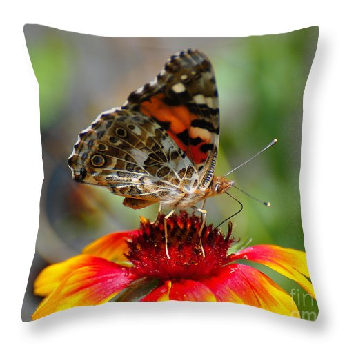 Butterfly Throw Pillow featuring the photograph Painted Lady by Todd Hostetter