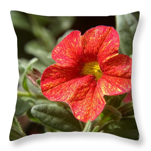 Flower Throw Pillow featuring the photograph Painted Petals by Kenny Glotfelty