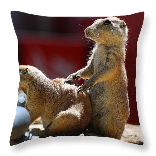 Prairie Dog Throw Pillow featuring the photograph Pair Of Prairie Dogs by DejaVu Designs