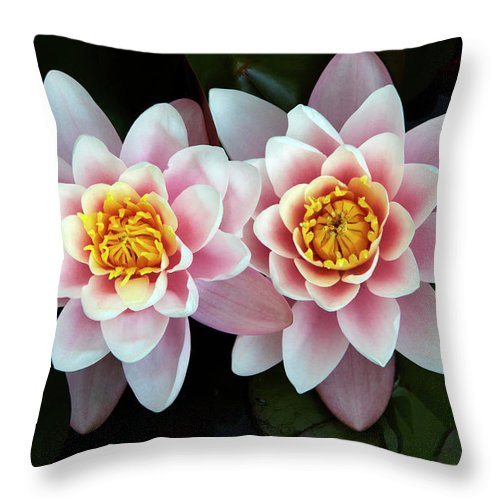 Cambridgeshire Throw Pillow featuring the photograph Pair Of Water Lilys by Allan Baxter