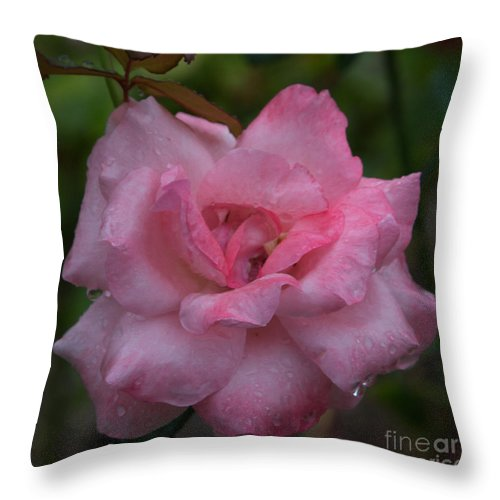 Pink Rose Throw Pillow featuring the photograph Pale Pink Beauty by Anita Miller