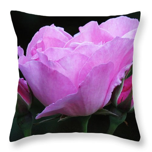 Pink Rose Throw Pillow featuring the photograph Pale Pink Rose by John Topman
