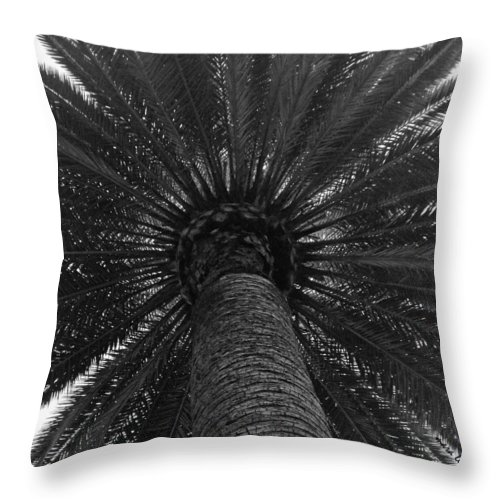 Palm Tree Throw Pillow featuring the photograph So Cal Umbrella by Mara Lee