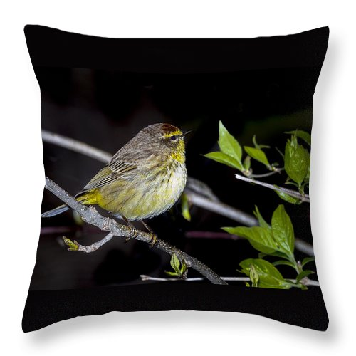 Animal Throw Pillow featuring the photograph Palm Warbler by Jack R Perry