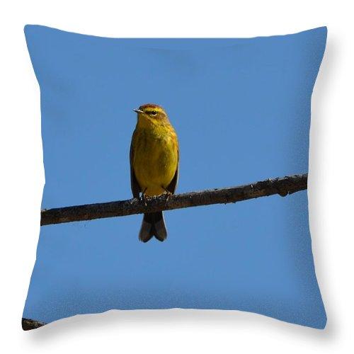 Palm Warbler Throw Pillow featuring the photograph Palm Warbler by James Petersen