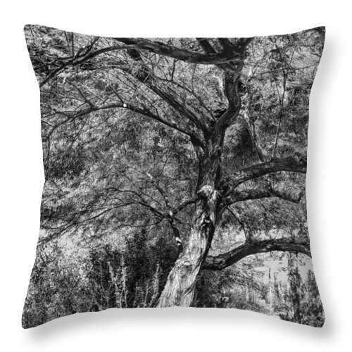 Palo Verde Throw Pillow featuring the photograph Palo Verde In Black And White by C H Apperson