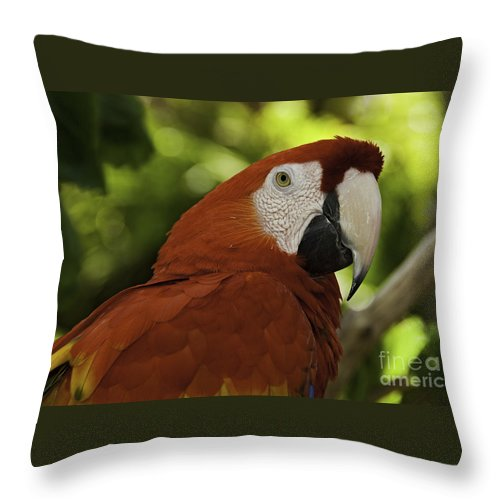 Bird Throw Pillow featuring the photograph Parrot Portrait by Phil Cardamone