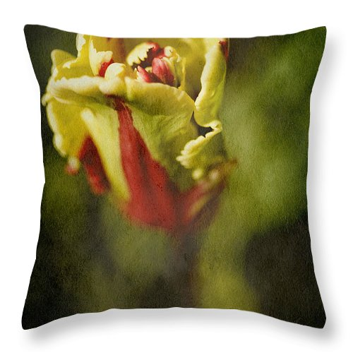 Parrot Tulip Throw Pillow featuring the photograph Parrot Tulip by Bonnie Bruno