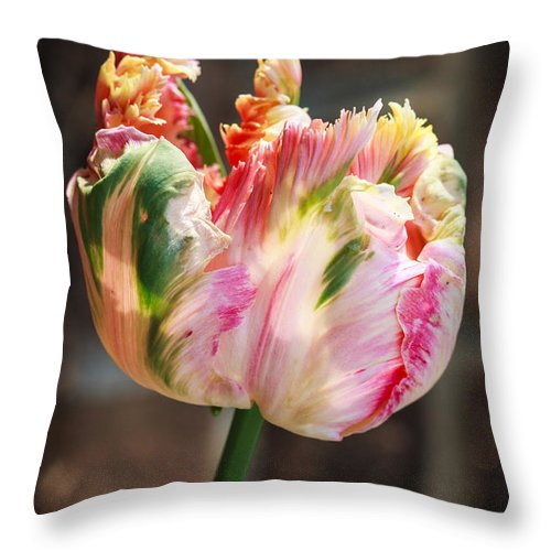 Tulip Throw Pillow featuring the photograph Parrot Tulip by Melissa Estep