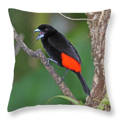 Nature Throw Pillow featuring the photograph Passerini's Tanager by Mike Dickie