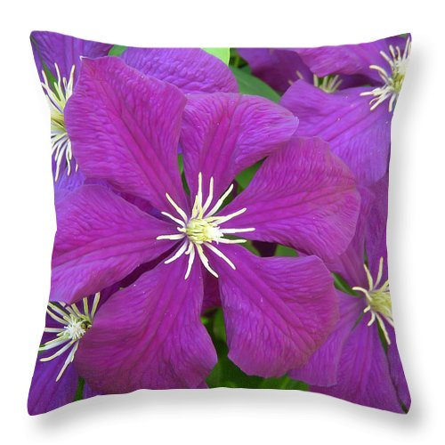 Flower Throw Pillow featuring the photograph Passion by Aimee L Maher ALM GALLERY
