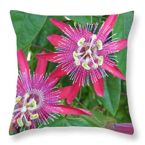 Passiflora Throw Pillow featuring the photograph Passion by Patricia Blake
