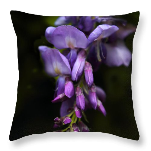 Flowers Throw Pillow featuring the photograph Past Prime by Jessica Jenney