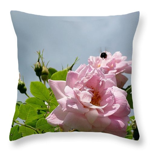 Rose Throw Pillow featuring the photograph Pastel Pink Roses With Bee by MTBobbins Photography