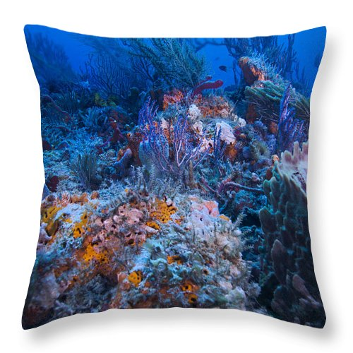 Angle Throw Pillow featuring the photograph Pastels by Sandra Edwards