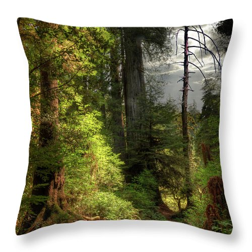 Tranquility Throw Pillow featuring the photograph Path Through Redwood Forest by Ed Freeman