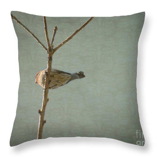 Bird Throw Pillow featuring the photograph Peaceful Perch by Meghan at FireBonnet Art