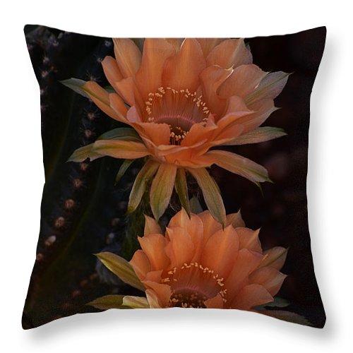 Peach Colored Echinopsis Throw Pillow For Sale By Saija Lehtonen