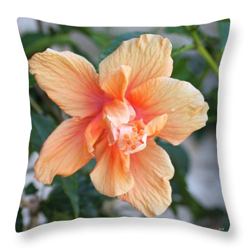 Flowers Throw Pillow featuring the photograph Peach by Lee Hartsell