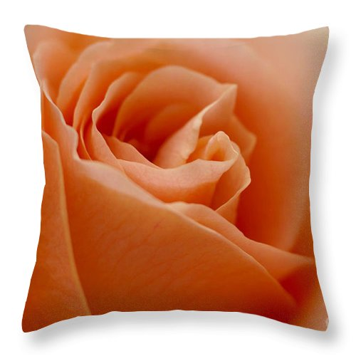Peach Throw Pillow featuring the photograph Peach Rose by Carol Lynch