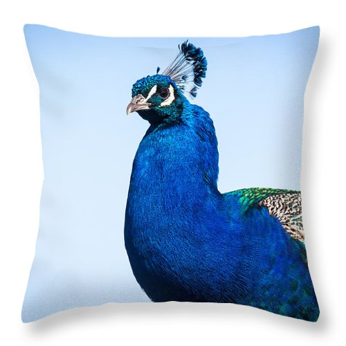 South Dakota Throw Pillow featuring the photograph Peacock 1 by M Dale