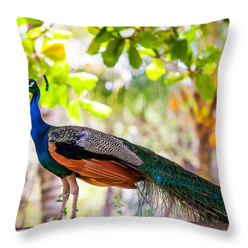 Peacock Throw Pillow featuring the photograph Peacock. Bird Of Paradise by Jenny Rainbow