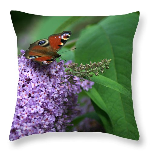 Butterfly Throw Pillow featuring the photograph Peacock Butterfly by Chris Day