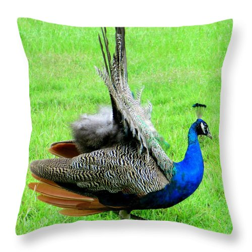 Peacock Throw Pillow featuring the photograph Peacock Courtship by Randall Weidner