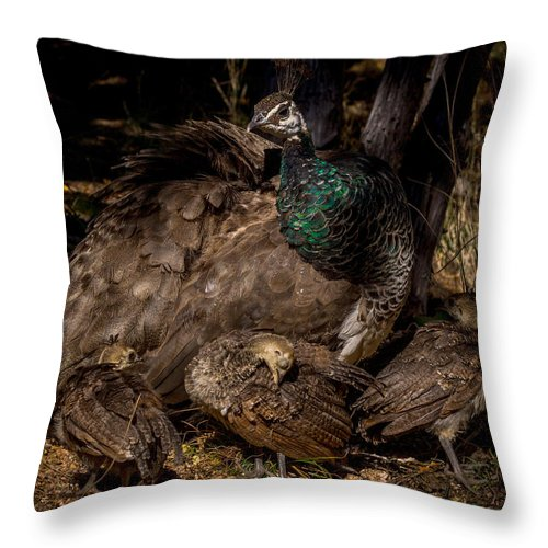 Bird Throw Pillow featuring the photograph Peacock Family Gathering by Ernie Echols