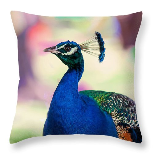 Peacock Throw Pillow featuring the photograph Peacock I. Bird Of Paradise by Jenny Rainbow