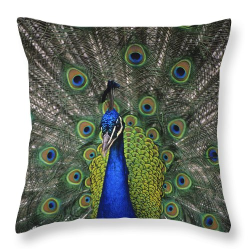 Animals Throw Pillow featuring the photograph Peacock In Open Feathers, Victoria, Bc by Leanna Rathkelly