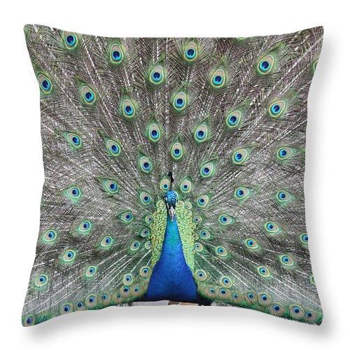 Peacock Throw Pillow featuring the photograph Peacock by John Telfer