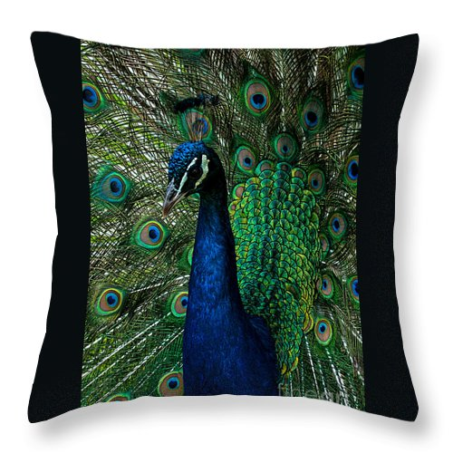 Male Throw Pillow featuring the photograph Peacock Portrait by Photos By Cassandra