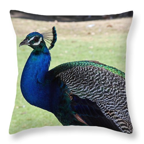 Peacock Throw Pillow featuring the photograph Peacock Profile by Shoal Hollingsworth