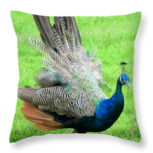 Peacock Throw Pillow featuring the photograph Peacock Ritual by Randall Weidner
