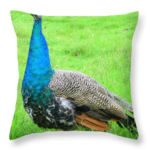 Peacock Throw Pillow featuring the photograph Peacock Walk by Randall Weidner