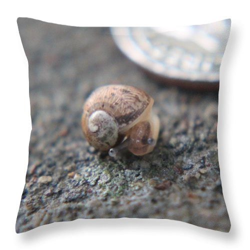 Snail Throw Pillow featuring the photograph Peak-a-boo Snail by Beth Buckley