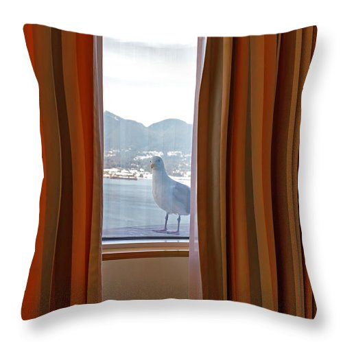 Seagull Throw Pillow featuring the photograph Peek-a-boo by Jodi Jacobson