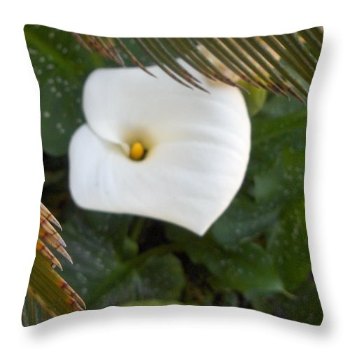 Throw Pillow featuring the photograph Peek A Boo by M Michele Herrick