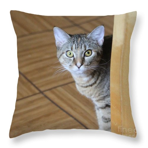 Cat Throw Pillow featuring the photograph Peeking Around The Corner by Michelle Powell